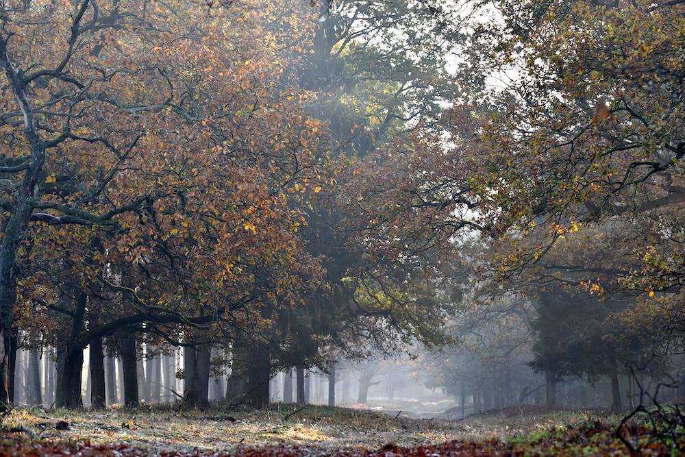 Wandelen herfst Deelerwoud