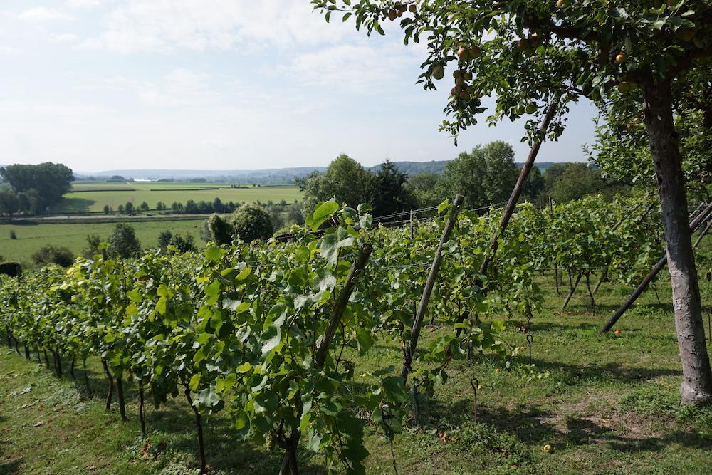 Wandelroute in Zuid-Limburg Route des Vins