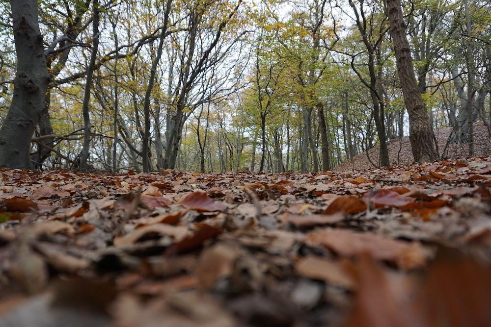 Wandelen Nationaal Park Zuid Kennemerland Nederland