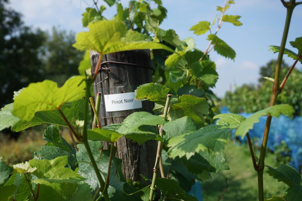 Wandelroute Zuid-Limburg Route des Vins