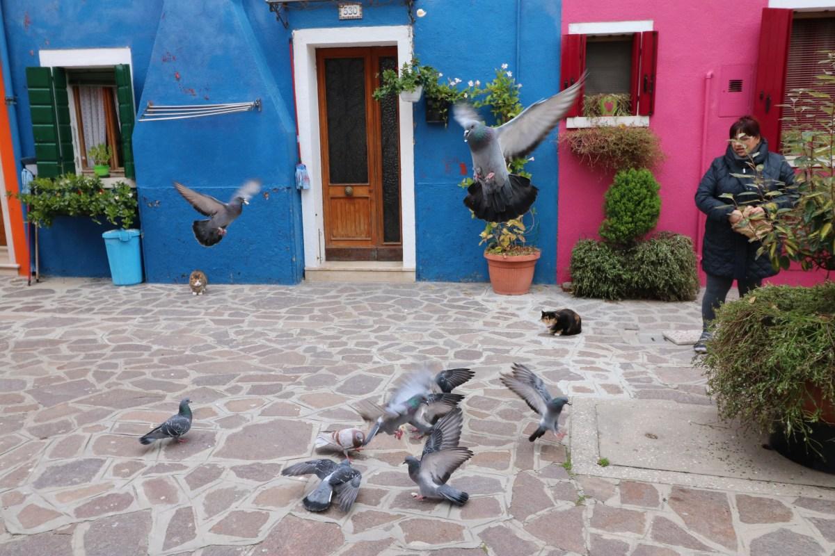 National Sport of Burano: Cat Hunting Pigeon