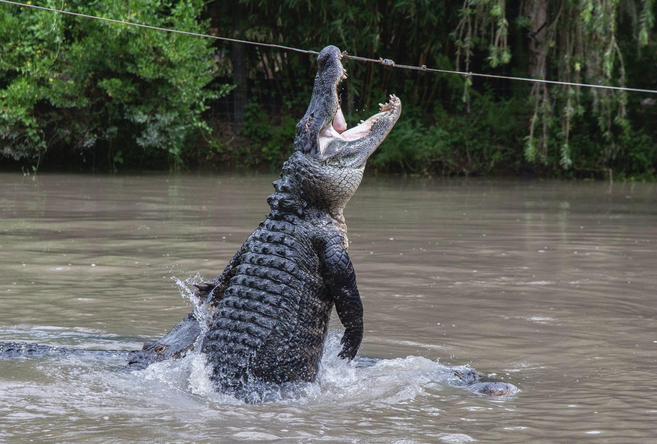 Gator Jumpathon!
