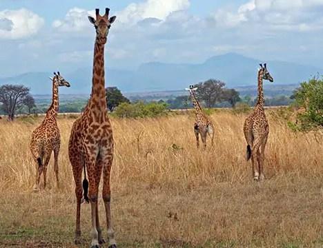 Safaris In Ukunda