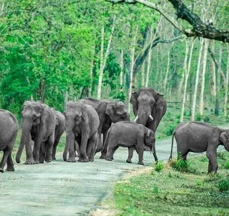 The Mysterious Beauty Of Phnom Kulen National Park