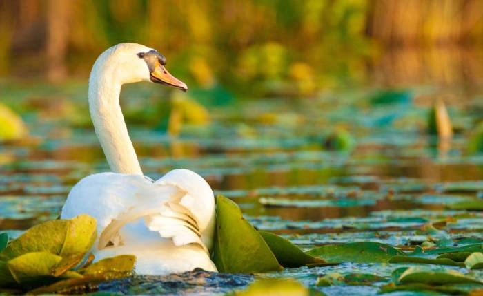 Black Sea & Danube Delta Tour