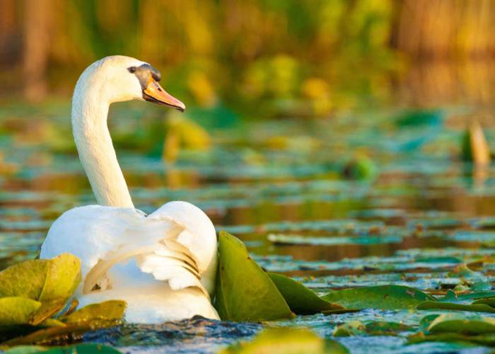 Black Sea & Danube Delta Tour