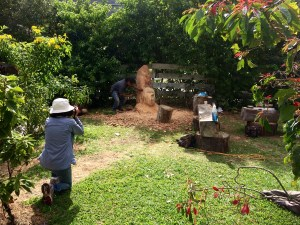 Wood Carving in Boquete