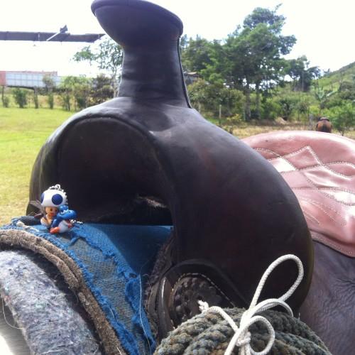Toad übt sich im Westernreiten und hat es sich auf einem Pferd gemütlich gemacht