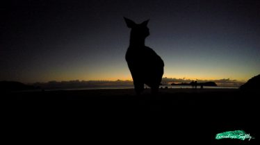 Cape Hillsborough australia