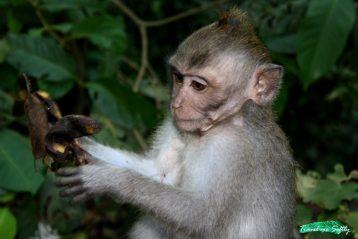 viaje animal Bali