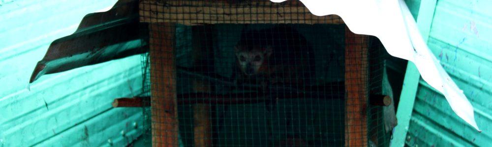 ¿Son traficantes de lémures?