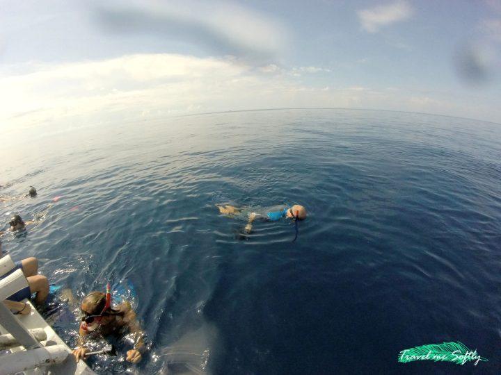 Buscando al tiburón ballena