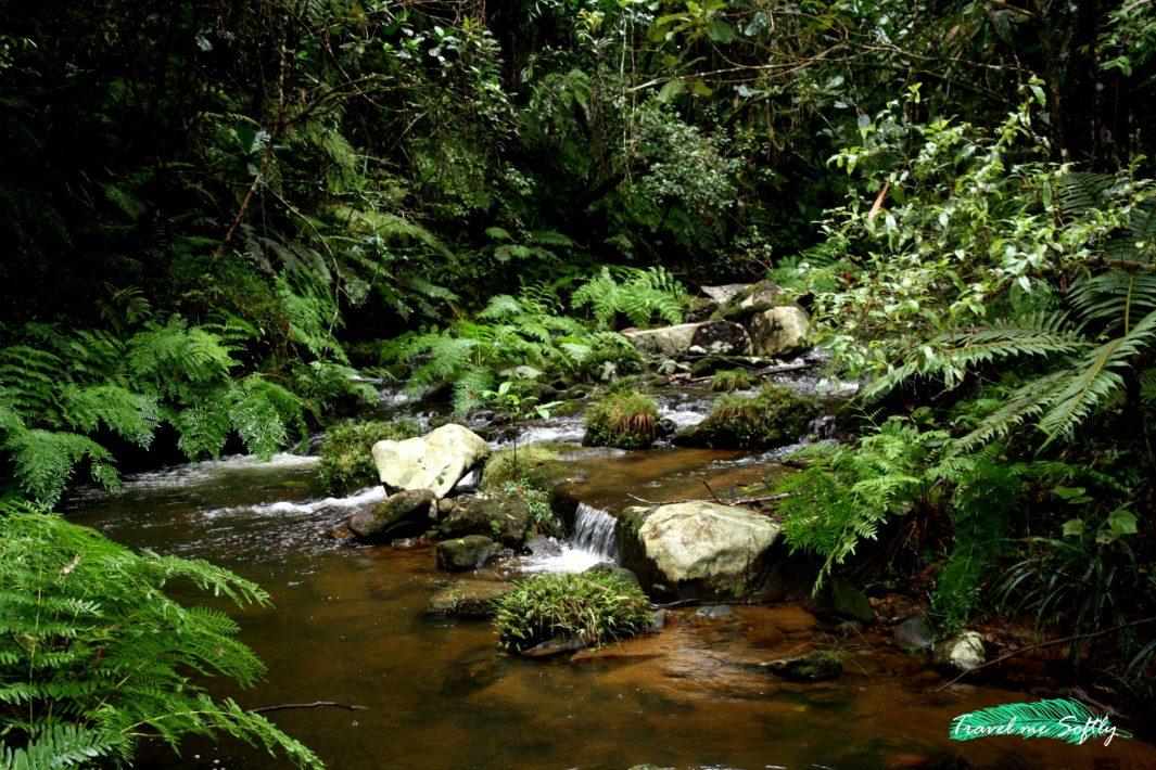 la naturaleza selva Andasibe