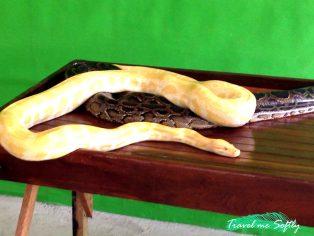 serpientes filipinas