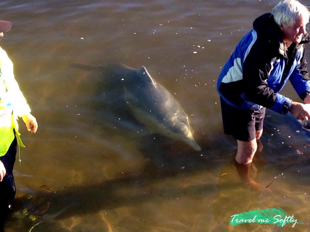 turismo responsable delfines