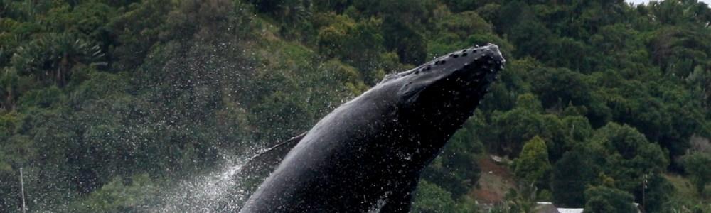 Experiencia animal: 6 historias, 6 animales salvajes y un solo propósito