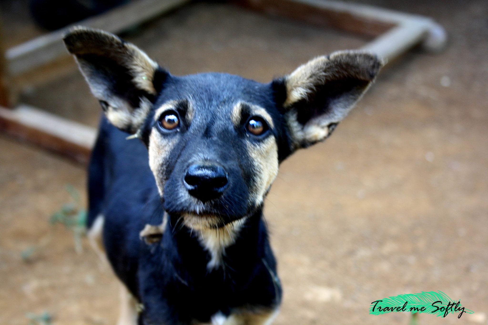 perro Nosy Komba en Madagascar