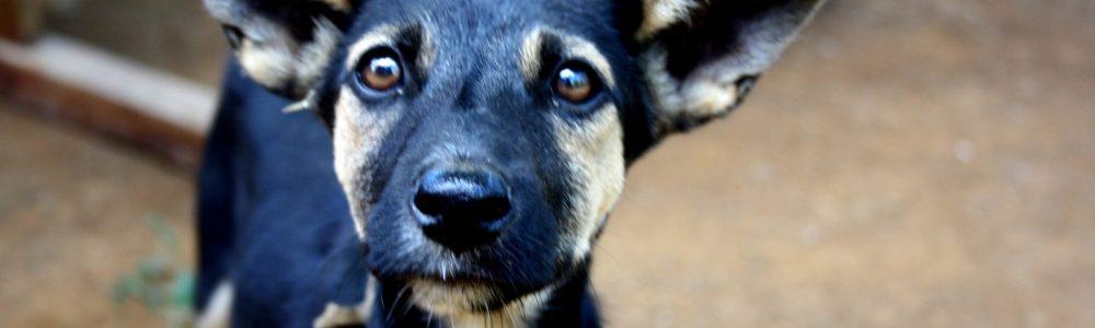 El escaso amor por los perros en Madagascar