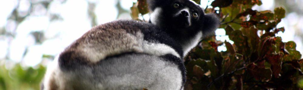 El Canto del Indri | Viaje a Madagascar