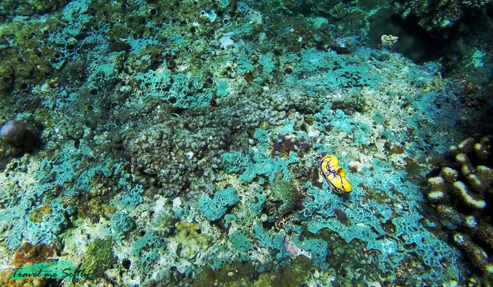 viajes de buceo filipinas