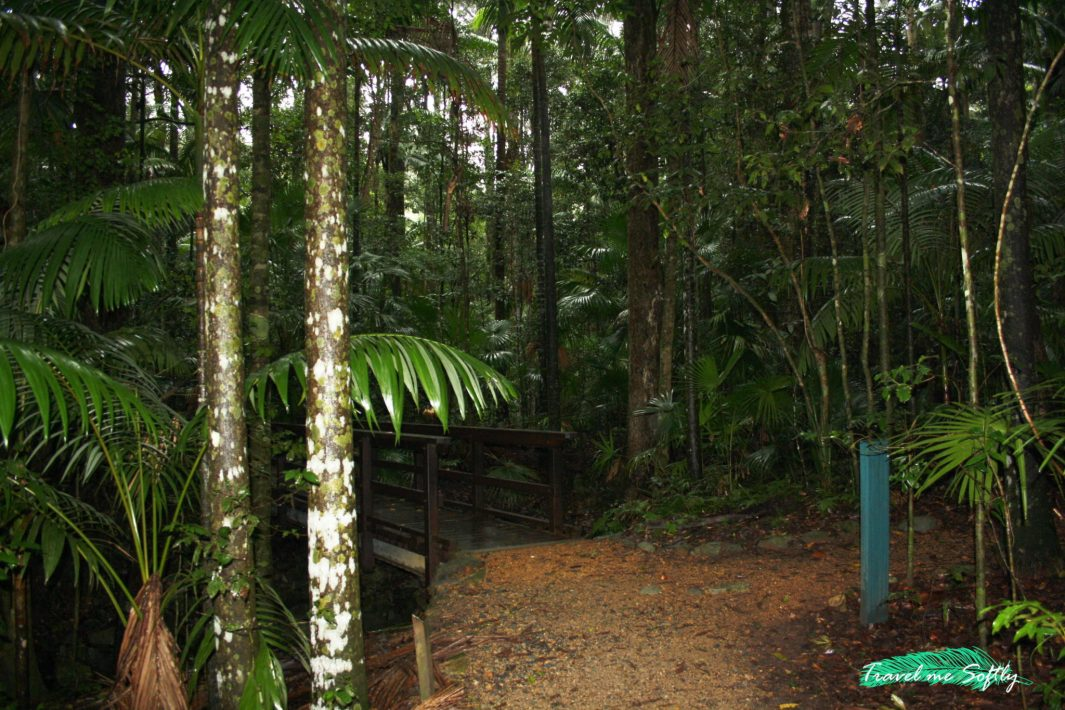 eungella national park ornitorrinco