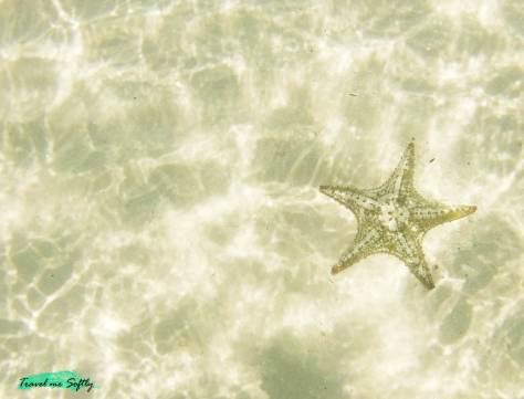 playa de las estrellas cayo jutías