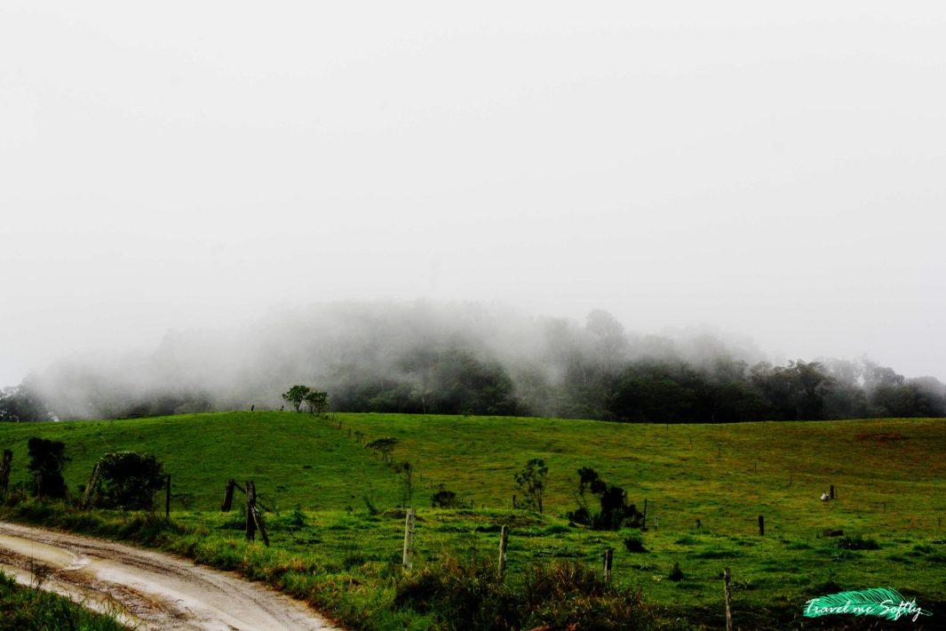 niebla eungella ornitorrinco