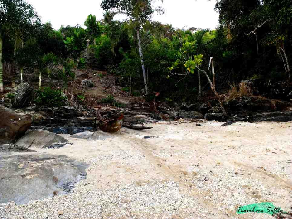 playa turtle cove