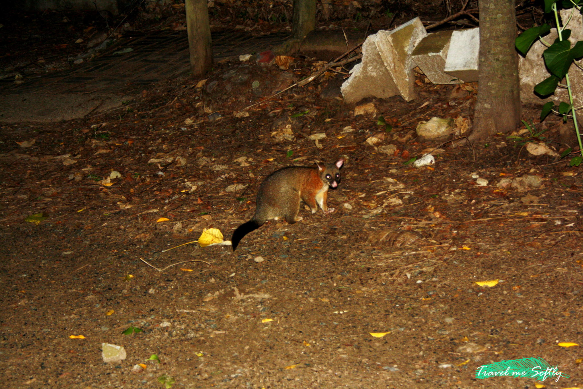possum Cape Hillsborough Nature Tourist Park