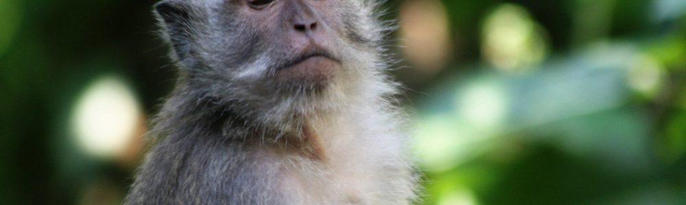 Ubud Monkey Forest, un imprescindible en tu viaje a Bali