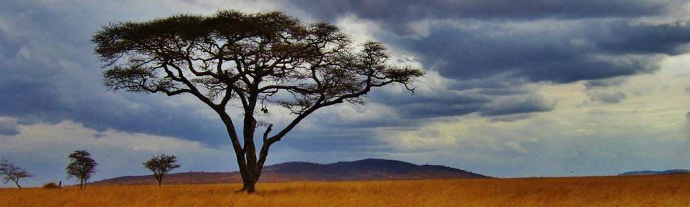 Viajar a Tanzania: un sueño para los amantes de la naturaleza