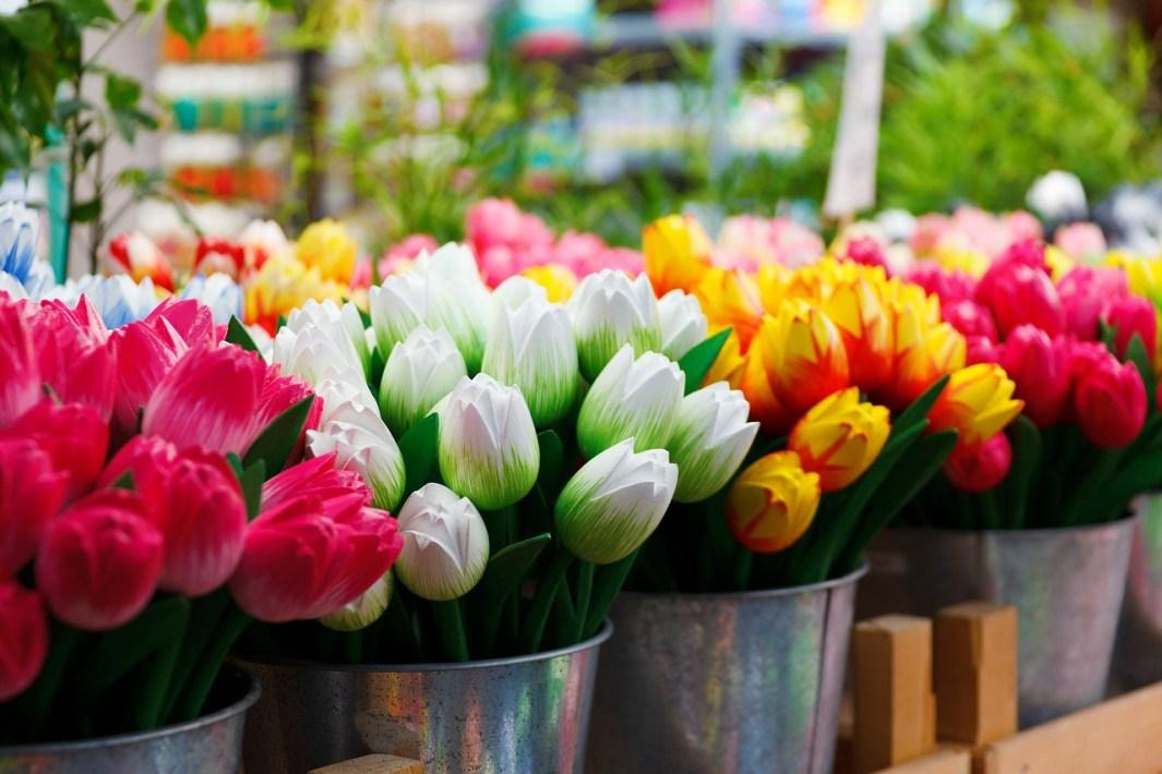 dormir en amsterdam tulipanes