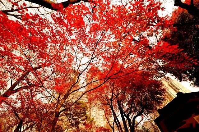 momiji tokio en otoño