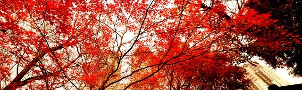 Un otoño en Tokio
