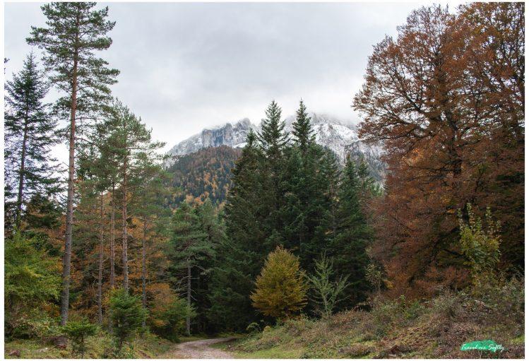 selva de oza bosques de españa otoño