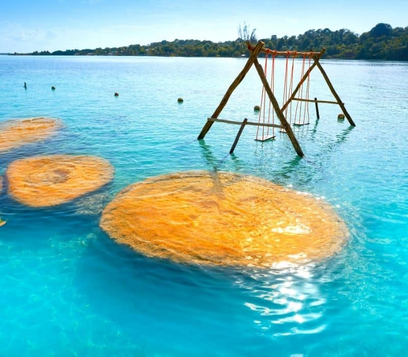 Bacalar coral in the water near a swing