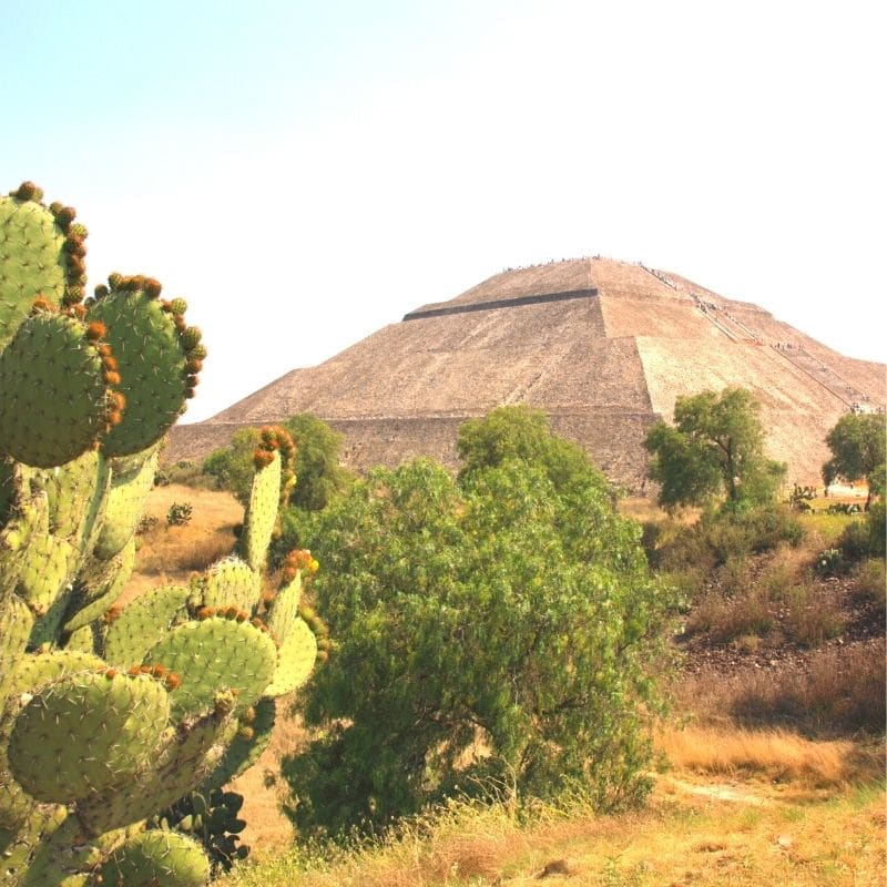 Aztec pyramid and some cacti