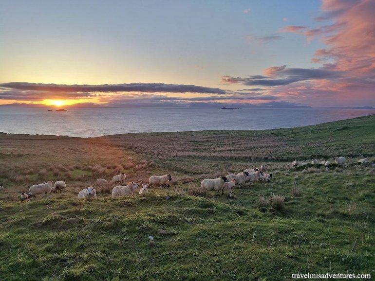 cosa-vedere-a-skye-scozia-tramonto-pecore