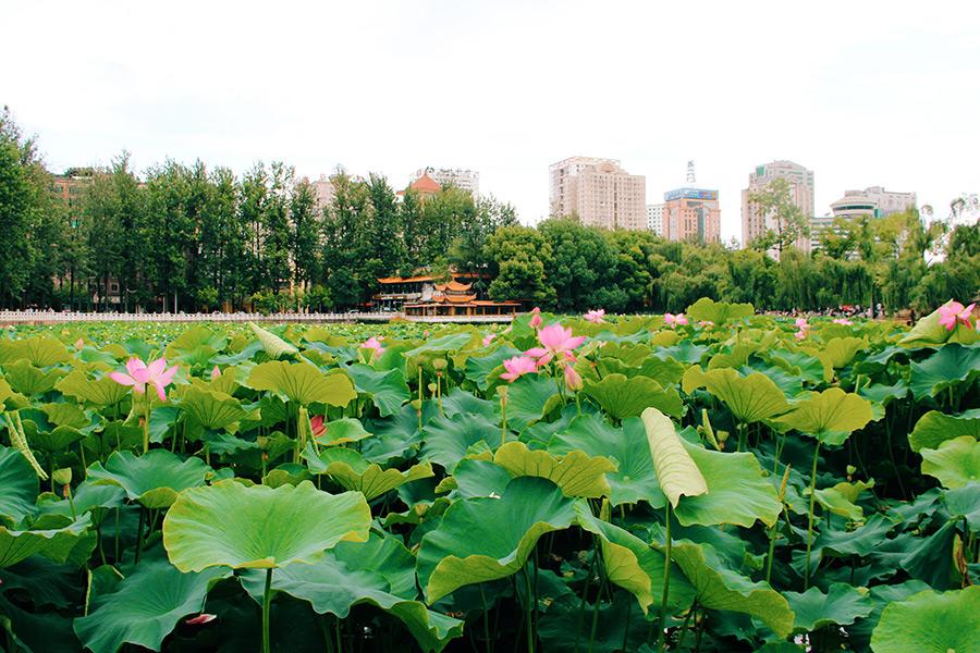 La cultura dei parchi pubblici in Cina
