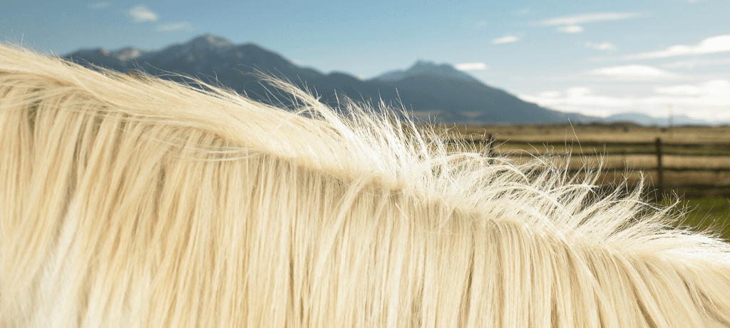 Horse Mane with Mountain in Background