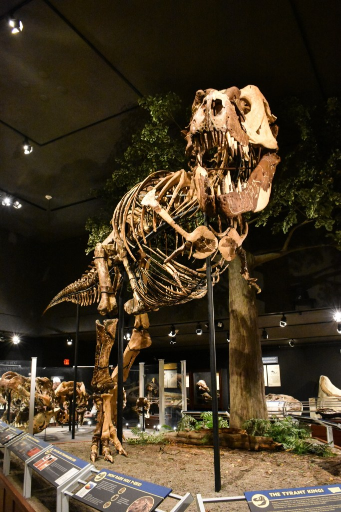 Museum of the Rockies in Bozeman Montana is a perfect rainy or cold day activity.