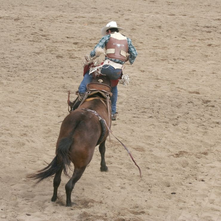 Attending a rodeo is a very Montanan thing to do.