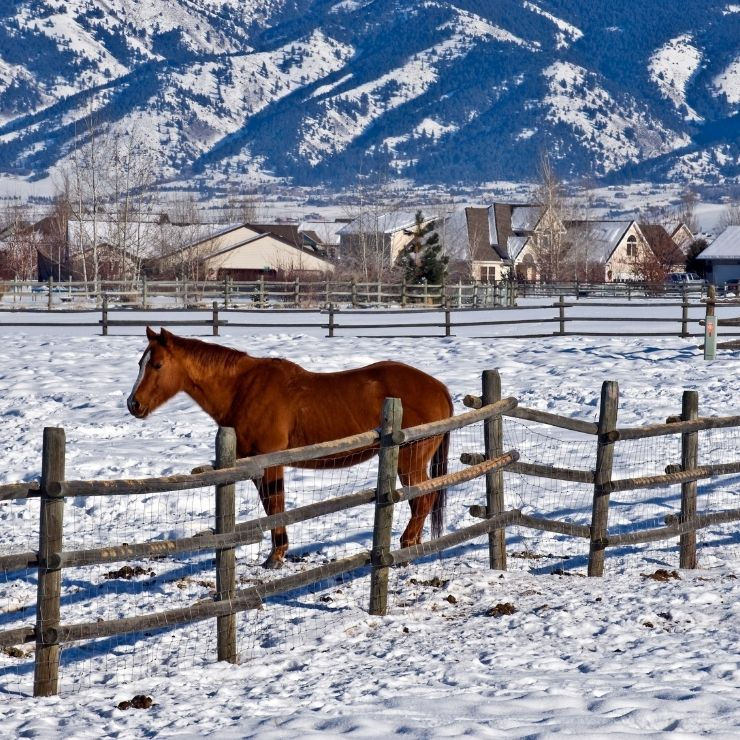 Horse in the snow in Montana