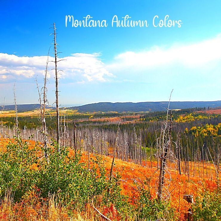 Fall foliage in Montana