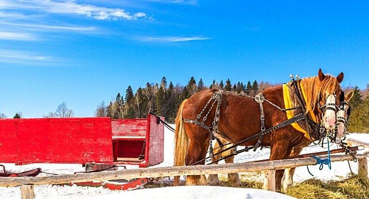 We've rounded up the best sleigh rides in Montana, which range from quick jaunts to several hour long excursions that include candlelit dinners.