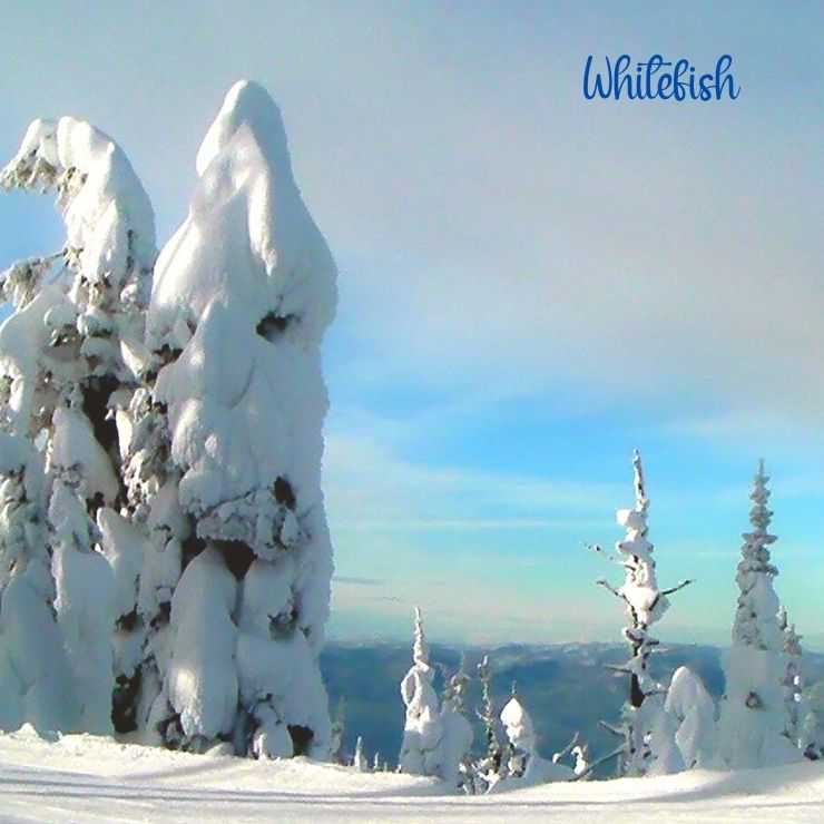 """""""Snow Ghost"""" trees seen at Whitefish Mountain during a weekend getaway in Montana."""
