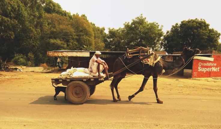 camel-cart.jpg