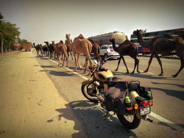 camel_med-quality.jpg