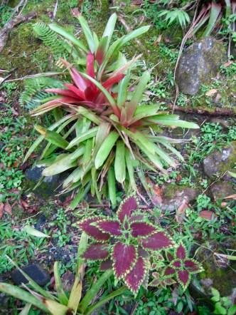 el-yunque-plants