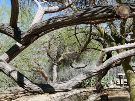 living desert tree travelnerdplans